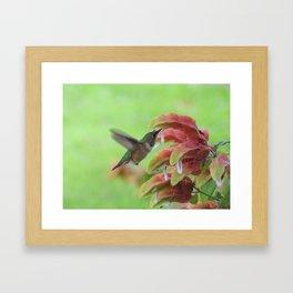 Hummingbird in Justicia Framed Art Print