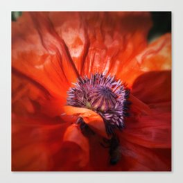 Red Poppy Floral Macro  Canvas Print