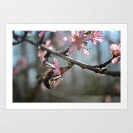 Bee on Peach blooms 2 Art Print