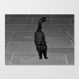 Spunky Black Cat Canvas Print