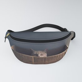 Cat in a box. The Zen cat master. Photography Fanny Pack