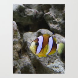 Sea World Colorful Fish Poster