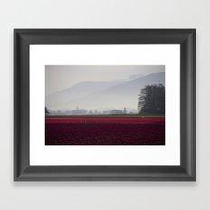 Tulip Fields in the Morning Light Framed Art Print