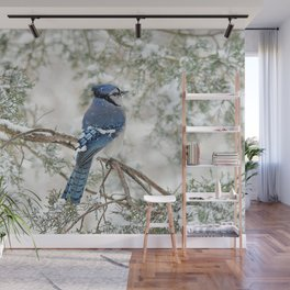 Snow Jay: American Blue Jay Wall Mural