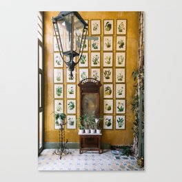 A Wall of Orchids, Merida, Mexico Canvas Print