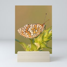 Knapweed Fritillary Mini Art Print