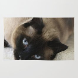 Siamese Soulful Expression Rug