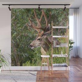 Watercolor Deer, Mule 19, Estes Park, Colorado, Velvet Splendor Wall Mural