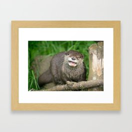Smiling Otter Framed Art Print