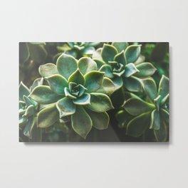 Botanical Gardens II - Succulents #423 Metal Print