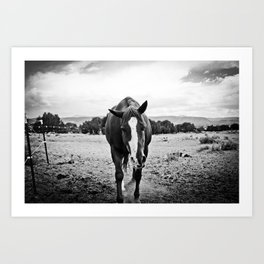 Desert Horse, II Art Print