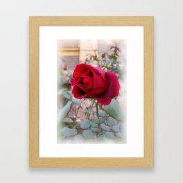 last red rose Framed Art Print