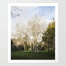 the white trees Art Print