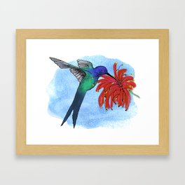 Eupetomena Macroura Framed Art Print
