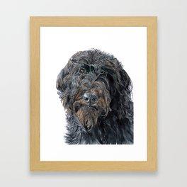 Pokey the Black Labradoodle Framed Art Print