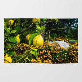 LemonTree Rug