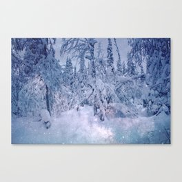 snow stars only trees Canvas Print
