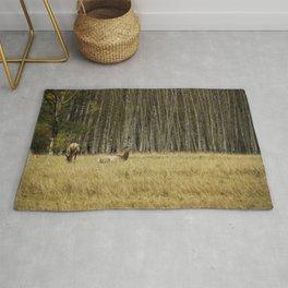 Cow Elk Resting - Grand Tetons Rug