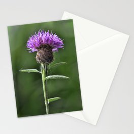 Common Knapweed 1 Stationery Cards