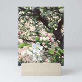 Crab-Apple Blossom Mini Art Print