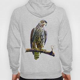 Ayres's Hawk Eagle Hoody