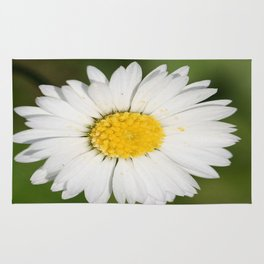 Closeup of a Beautiful Yellow and Wild White Daisy flower Rug