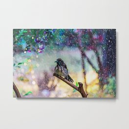 Celebratory Fling in Light-New Holland Honeyeater Metal Print