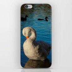 Sleepy Goose iPhone & iPod Skin