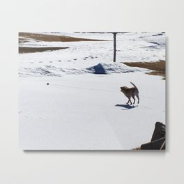 Chasing the Snowball Metal Print
