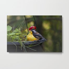 Bird Snack Metal Print