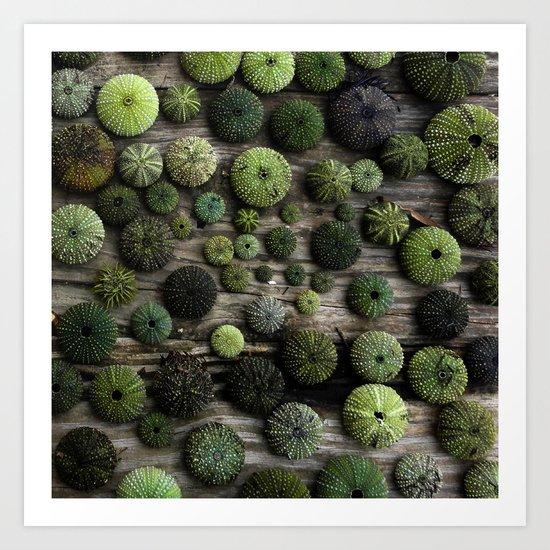 Urchins Art Print