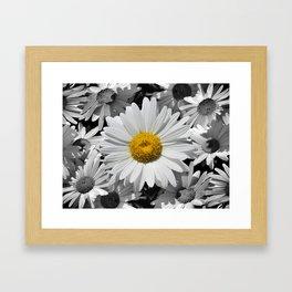 Cheerful Daisy Flower A197 Framed Art Print
