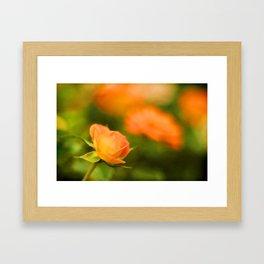 MS Rose Framed Art Print