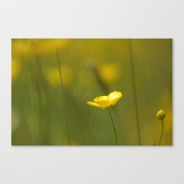 Yellow flowers 3 Canvas Print