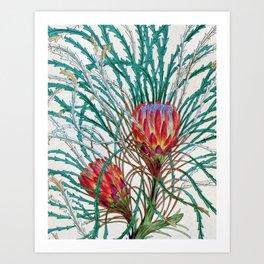 A Protea flower Art Print