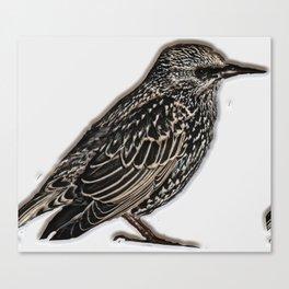 Norfolk sparrow Canvas Print