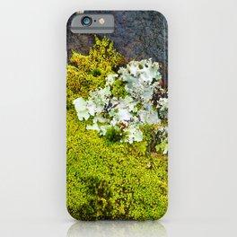 Tree Bark with Lichen#8 iPhone Case