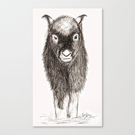 Baby Musk Ox Canvas Print