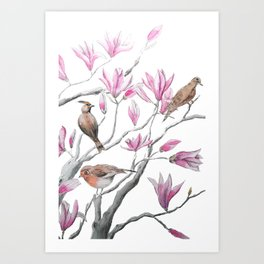 magnolia flowers and birds Art Print