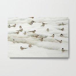 Arctic terns | The greatest traveler bird | Iceland Travel Photography Metal Print