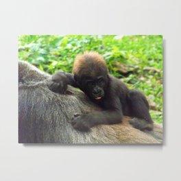 Baby Gorilla Riding Mother's Back Metal Print
