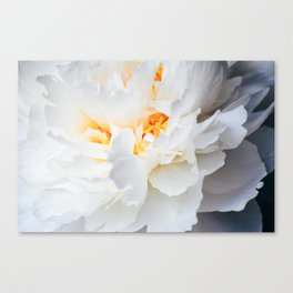 Quiet Beauty Canvas Print