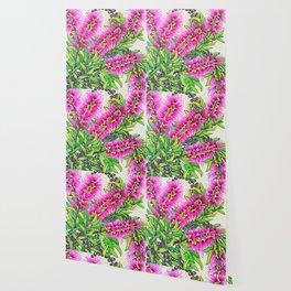 Callistemon Wallpaper
