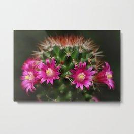 Pink purple flower Mammillaria Metal Print