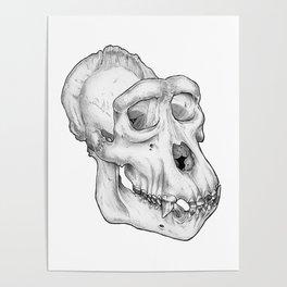 Gorilla Skull Poster