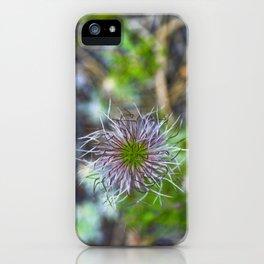 Prairie smoke wildflower iPhone Case