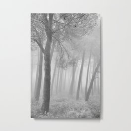Magic Morning. Into The Foggy Forest. Spring. BW Metal Print