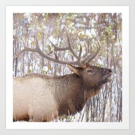Watercolor Elk Bull 75, Estes Park, Colorado, Its a Hoot Art Print