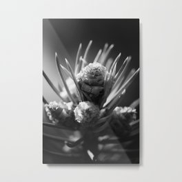 aspirations of the pinecone Metal Print