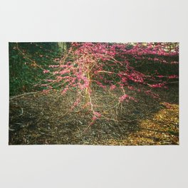Chinese Red Bud  Rug